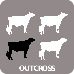 Outcross